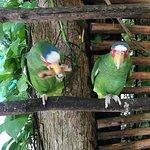 Φωτογραφία: Croco Cun Zoo