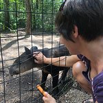 The baby tapir LOVED getting scratches under his chin.
