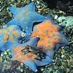 Photo de Noboribetsu Marine Park Nixe