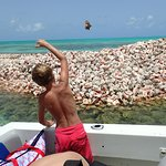 Adding to Conch Shell Island