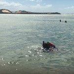 Foto de Dolphins Bay