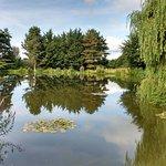 Mallard Pond