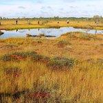 Varnikai Path in the Swamp