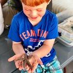 صورة فوتوغرافية لـ Salt Marsh Safari-The Skimmer