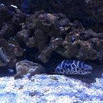 Foto de North Carolina Aquarium at Fort Fisher