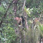 Monkeys in the courtyard!