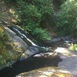 Sweet Creek Falls Photo