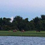 Wild horses on the Rachel Carson Preserve.