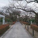 Foto de Aoyama Cemetery