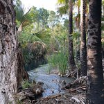 Foto de Bitter Springs