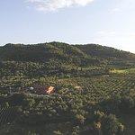 صورة فوتوغرافية لـ L'Olivastra - Poderi Borselli