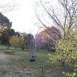 蜻蜓池公園照片