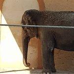 Safari Zoo Foto