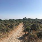 Nature Reserve of Westhoek Photo