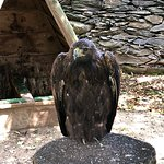 Photo of Les Aigles d'Aure - Volerie des Pyrenees