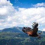 Wings wide open