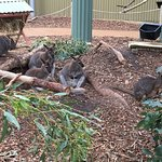 Billede af Maru Koala and Animal Park