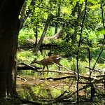 Foto de Piedmont Environmental Center