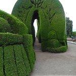 Los arcos de pino