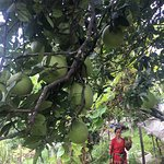 Bilde fra Organic Farm House Resort Kapan