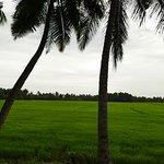 Photo of Kalappura Tours