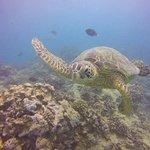 Фотография Oahu Diving