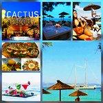 Photo of Cactus Beach