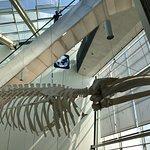 Photo of German Oceanographic Museum (Deutsches Meeresmuseum)