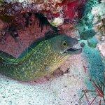 Foto de Culebra Divers