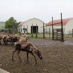 Reindeer Ranch의 사진