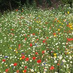 Nice patch of wild flowers provided some colour.