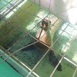 Foto de Morro Bay Aquarium