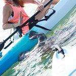 Photo of Kayaking SRQ Tours and Rentals