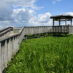 Along the floating boardwalk is a covered observation deck in the very heart of the marsh.
