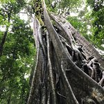 Foto de Reserva Curi-Cancha