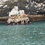 Foto van Resurrection Bay