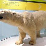 In the Arctic exhibit area