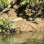 Foto Solar Whisper Daintree River Wildlife Cruises