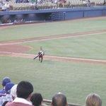 Cashman Field...Ball Dog doing his thing...