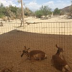 Foto The Living Desert