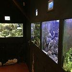 General view of the aquarium.