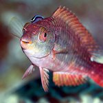 Billede af Island Divers Belize