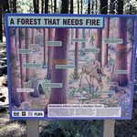 Story board within the forest, promoting responsible forest management