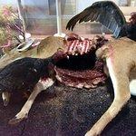Vultures and deer carcass diorama