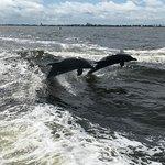 Cruise Orange Beach Dolphin Cruises รูปภาพ