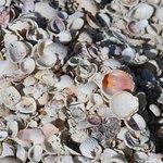 Shells upon shells.
