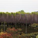 Foto van Ashikaga Flower Park