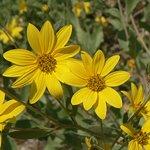 Wildflowers along Ute Trail