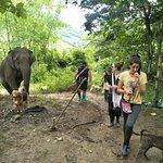 Photo of Elephant Steps Chiang Rai