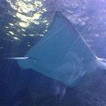Photo of SEA LIFE Melbourne Aquarium